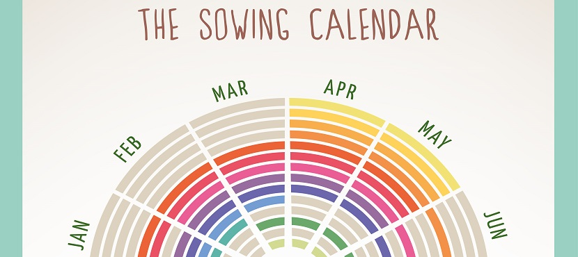 An example of a vegetable planting calendar for Texas gardening tips.