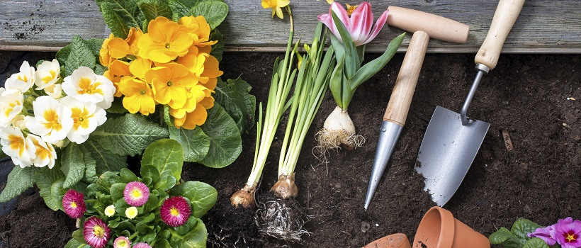 Soil, moisture, location, and more are all key to making the perfect Texas garden.