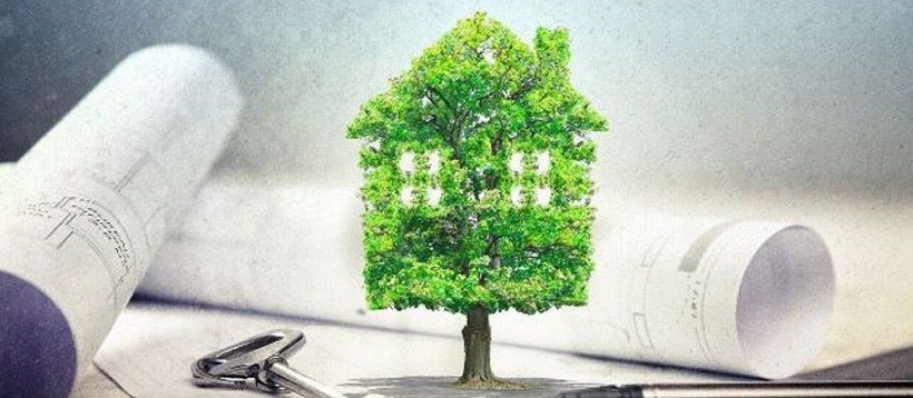 Home photoshopped as tree in front of building plans