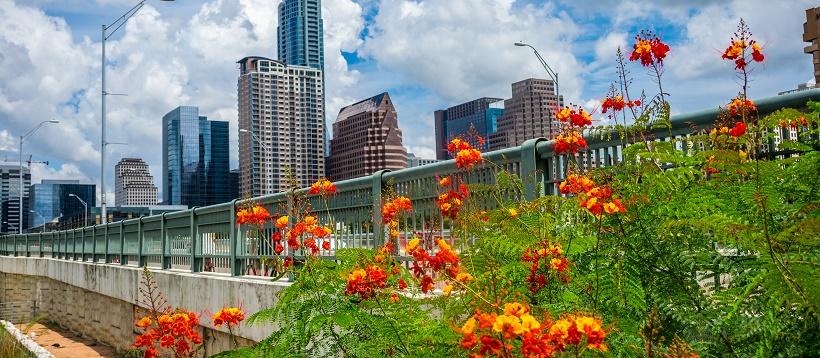 Orange flowers along bridge in front of downtown Austin, Texas