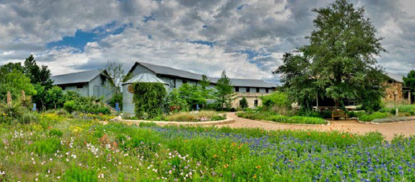 Front entrance of Lady Bird Johnson Wildflower Center with bluebonnets and other wildflowers growing wildly.