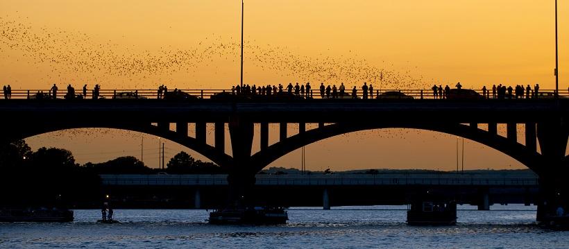 Bats flying off into an orange sunset above the Congress Avenue Bridge.