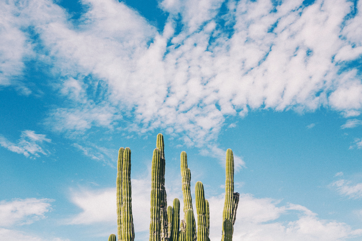 Cactus - Austin, TX - MileStone Community Builders